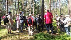 MJRyhmä+metsässä.jpg